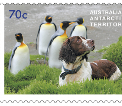 stamps,Dogs That Saved Macquarie Island,steve austin,Labrador Retriever,Springer Spaniel