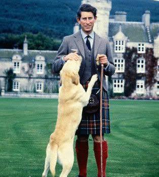 Labrador Retriever,Queen Elizabeth I, Prince Philip,Corgi,pigeon, Prince Charles