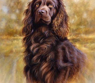 turkey-hunting,turkey dog,hunting dog,Appalachian Turkey Dog,Plott,Boykin Spaniel,Pointer,Setter,John H. Byrne,Jr.