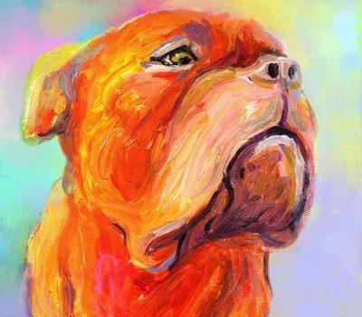 French Mastiff,Dogue de Bordeaux,history,butcher's dog,Doguin d'Aquitane