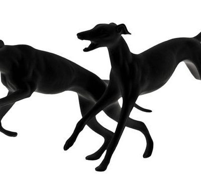 racy,structure,Greyhound,Akita,Miniature Schnauzer,Whippet