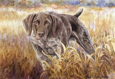 German Shorthaired Pointer,Prussian Pointer,color,