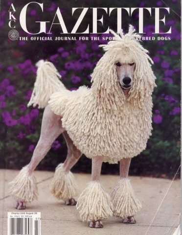 poodle,coat,corded coat,corded poodle,carly,Ch. Somerset Sweet Success,curly poodle,AKC GAZETTE