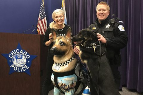 Chicago,Police Dogs,K-9,German Shepherd Dogs. Last year, four Labrador Retriever,Belgian Malinois.Rolling Meadows Police Department