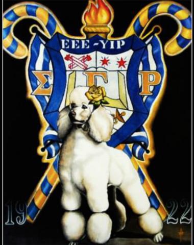 toy poodle,sorority,Alpha Kappa Alpha Sorority,Delta Sigma Theta Sorority,Zeta Phi Beta Sorority,Sigma Gamma Rho Sorority