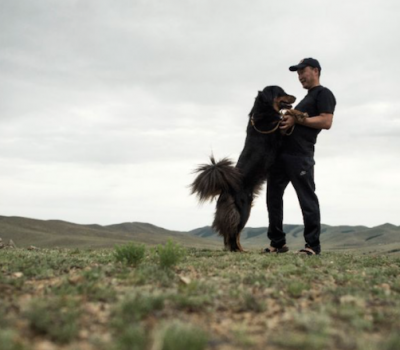 Bankhar,Mongolian Bankhar Dog,Livestock Guardian Dog,Bruce Elfstrom,Mongolian Bankhar Dog Project