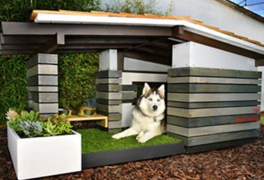 Pijuan Design Workshop,design,purebred dogs