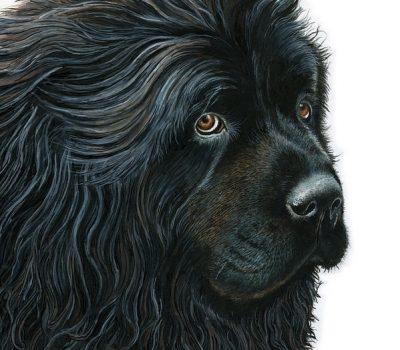 Newfoundland, Labrador Retriever, toes,water dog,Liane Weyers, Poodles, Chesapeake Bay Retriever,Barbet,Poodle,