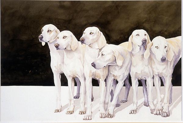 Billy,Ceris,hound,King's White Dog,Montaimboeuf,Laryee