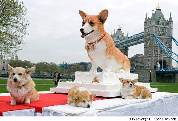 The Largest Dog Cake in the World: What Breed?