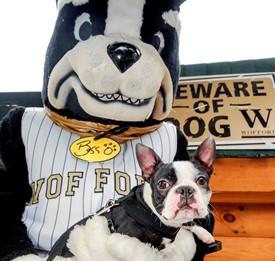 Boston Terrier,mascot,blitz,Wofford College