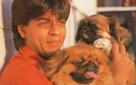 Bollywood's Dogs