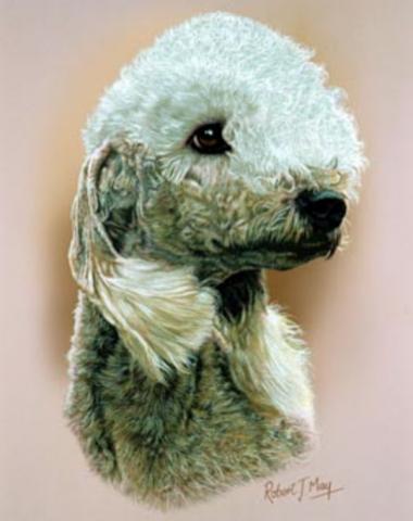 Bedlington Terrier,Scottish Terrier,Boris Karloff,Frankenstein
