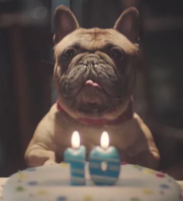alexa,french bulldog,tv,commercial,advertising