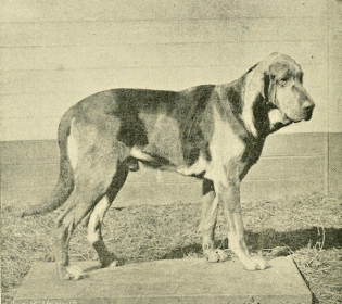 Bloodhound,Jack the Ripper, Percy Lindley, Sir Charles Warren,scenthound, police dog, tracking,Burgho,Barnaby