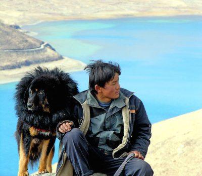 Himalayan Mastiff,Tibetan Mastiff,Shangri-La,Lost Horizon,Shambala,Do-Khyi,Tsang-khyi,color,legend,history