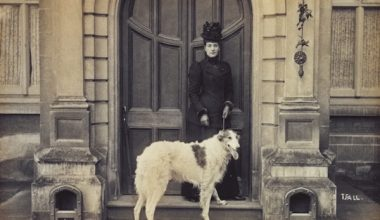 Borzoi,Queen Victoria,Prince of Wales,Edward VII,Russian Wolfhound,Czar