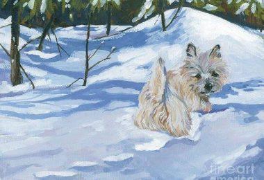 Cairn Terrier, feet, structure,