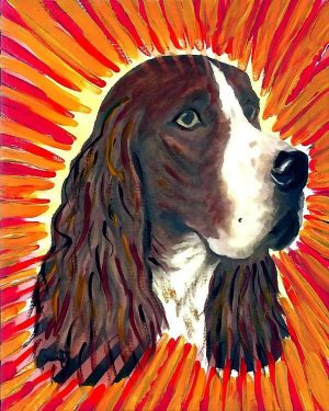 English Springer Spaniel,structure,head,nose,