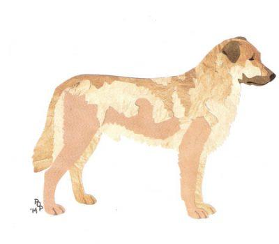 Chinook, sled dog, draught dog, Arthur Treadwell Walden