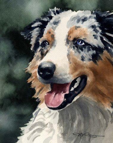 Australian Shepherd,wearing,herding,stockdog