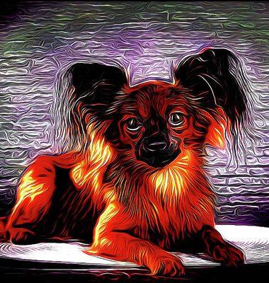 Russian Toy Terrier,Chicky,Yevgueniya Fominichna Zharova,English Toy Terrier,