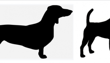 structure,forechest,chest,breeder,front assembly, Smooth Fox Terrier,Dachshund