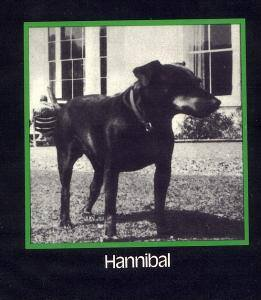 Manchester Terrier,Agatha Christie,Hannibal,Bingo,Tommy and Tuppence Beresford,literature