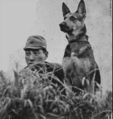 German Shepherd Dog, Doberman Pinscher, Akita, Airedale Terrier,military dog, war dog