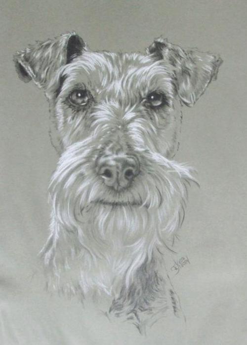 Irish Terrier, Alexander Dumas,D'Artagnan,nickname.