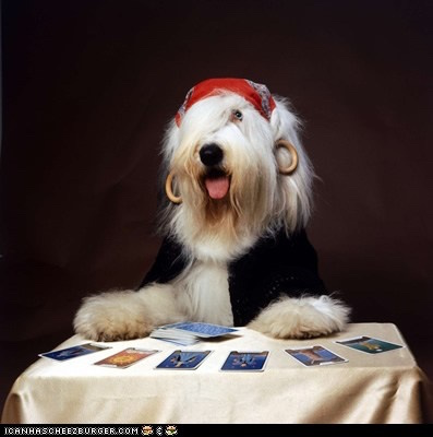gypsy,Romany,Roma,Dalmatian,Bedlington Terrier,Poodle,Yorkshire Terrier, Whippet, Dandie Dinmont