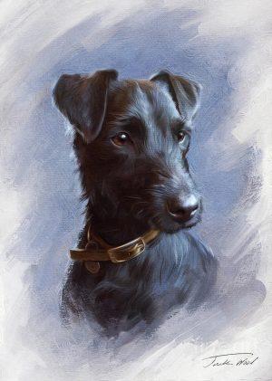 Patterdale Terrier, fell terrier,Joe Bowman