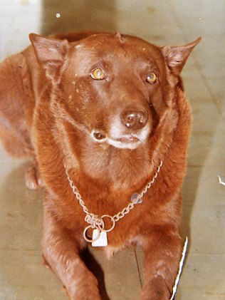 Reddog Com