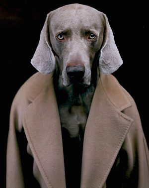 Weimaraner,William Wegman