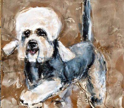 Dandie Dinmont Terrier,coat,term,pily