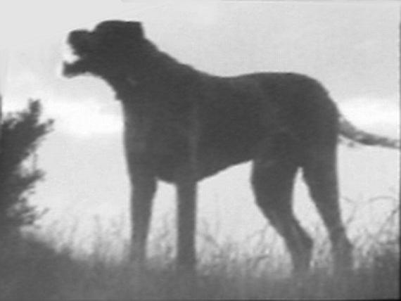 black dog,Richard Cabell,Hairy Jack, Padfoot, Black Shuck, Skriker, Barguist, Gytrash, the Grim, Lean Dog, Shug, Trash,Arthur Conan Doyle,The Hound of the Baskervilles,legend,fiction