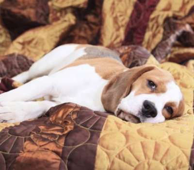 Monday Morning, Beagle