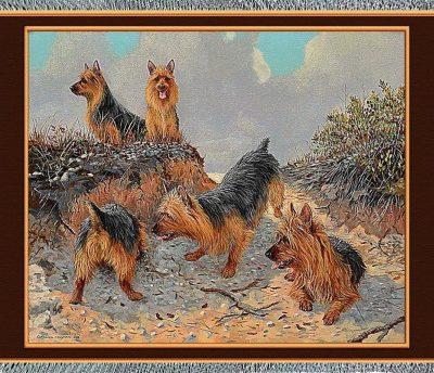 Australian Terrier,Cesky Terrier,American Hairless Terrier,Tenterfield Terrier