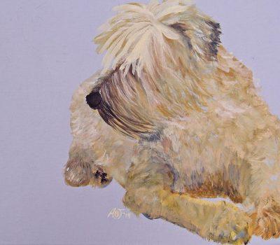 Soft Coated Wheaten Terrier,Iron Fist in a Velvet Glove,nickname,Teastas Mor