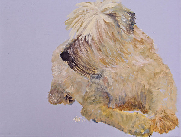 Soft Coated Wheaten Terrier,Iron Fist in a Velvet Glove,nickname,Teastas Mor