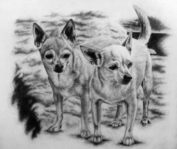 Chihuahua,quiz