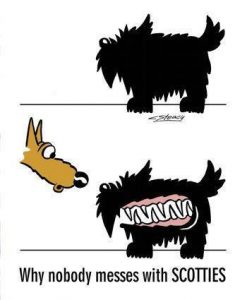 Scottish Terrier, Scottie