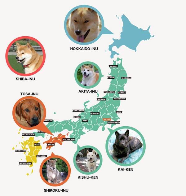 Kai Inu, Hokkaido Inu, Kishu Inu,Shikoku Inu, Akita Inu,Kai Ken,Japanese Chin, Japanese Spitz, Japanese Terrier, Tosa Inu,Sakhalin Husky
