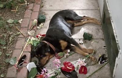 Rottweiler,Ferris Bueller's Day Off,movie,film
