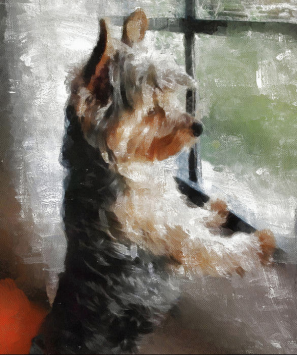 Yorkshire Terrier,ratter,history