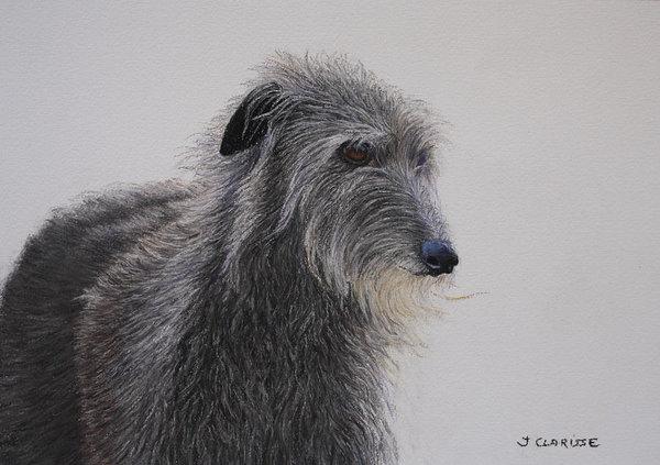 ears,Scottish Deerhound,standard