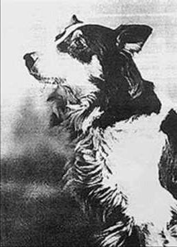 Strongheart, Rin Tin Tin,Jean,the Vitagraph dog,Helen Hayes,Etzel von Oeringen,Laurence Trimble,Collie,Border Collie,film,movies