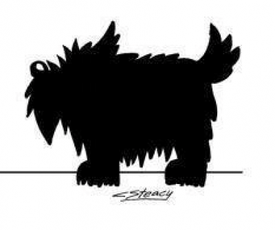 scottish terrier,scottie, ratter