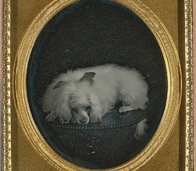 poodle,photography,history
