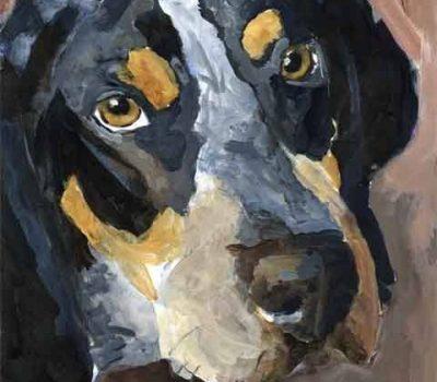 Bluetick Coonhound,coonhound,off game,English Foxhound
